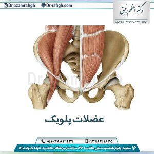 عضلات پلویک